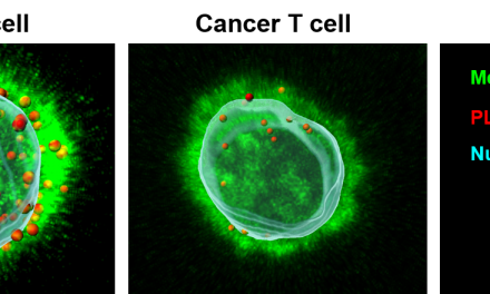 HEALTH NEWS: Arming the body's immune cells