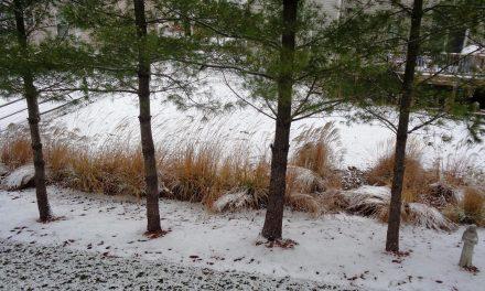 December sneaks in under a white blanket