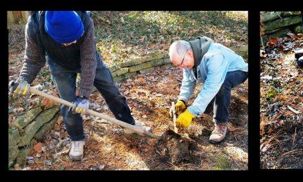 LOVELAND PLANS REFORESTATION IN PHILLIPS PARK
